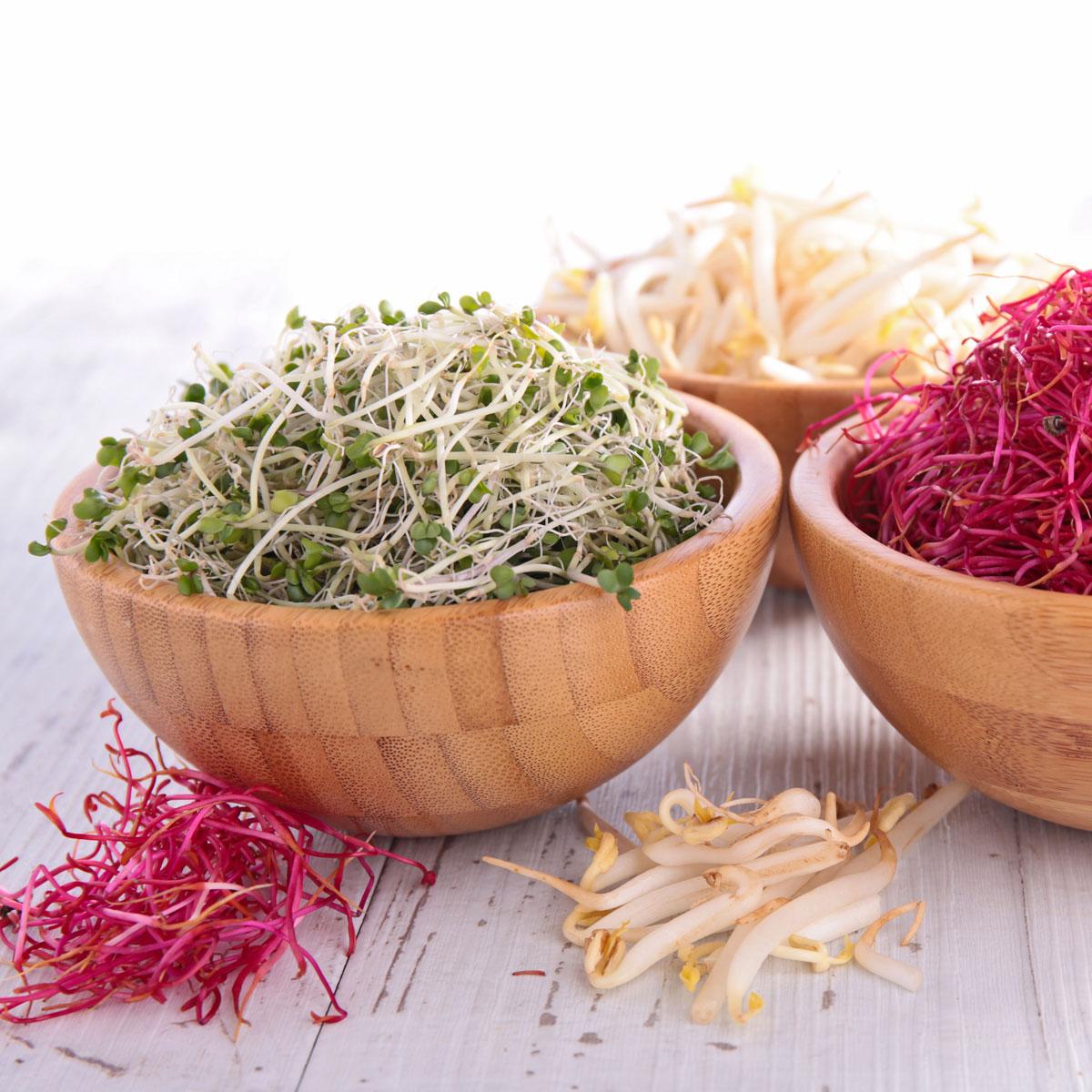 Germinados: nutrientes a la máxima potencia para reparar nuestro organismo
