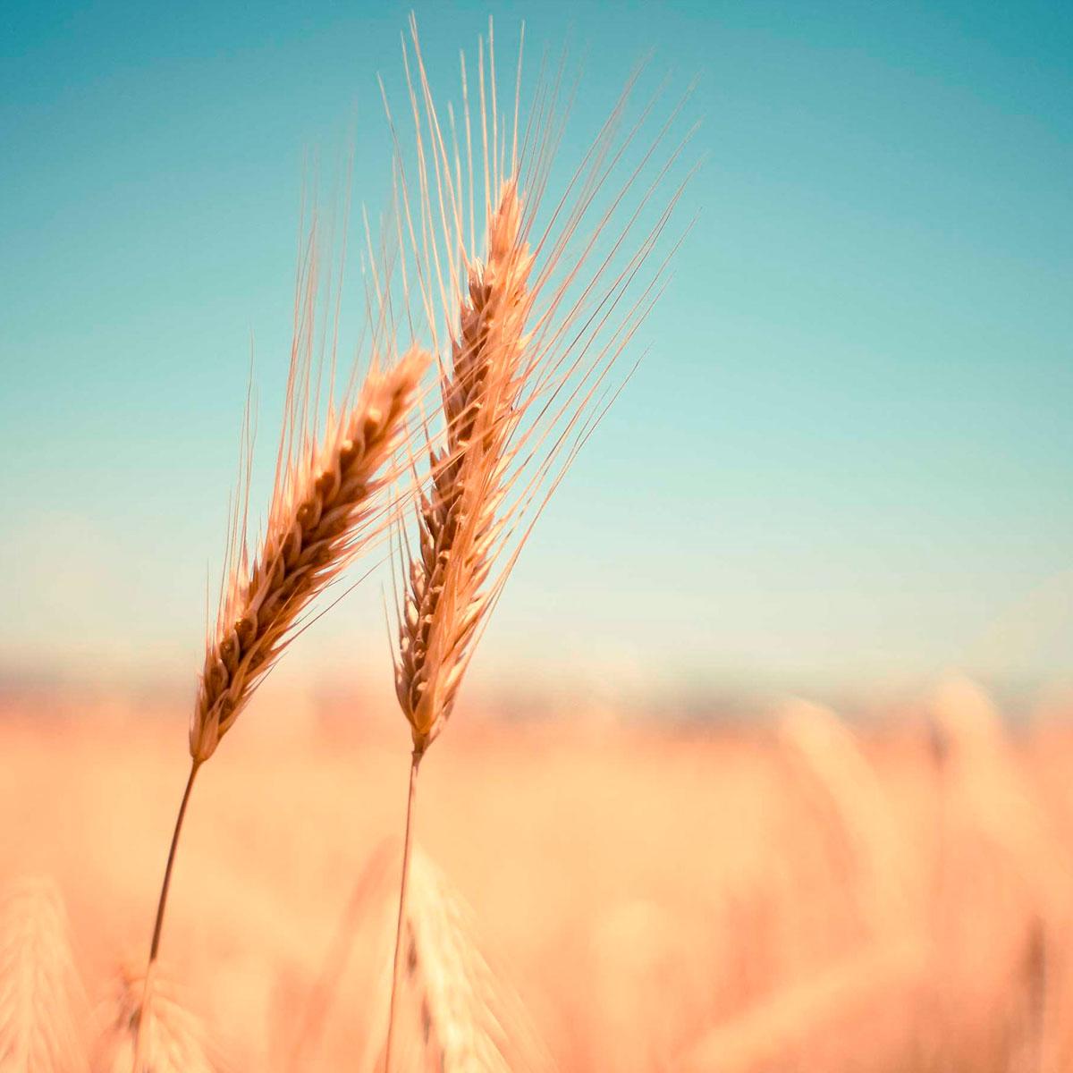 Cereales integrales, ¡la opción más completa!